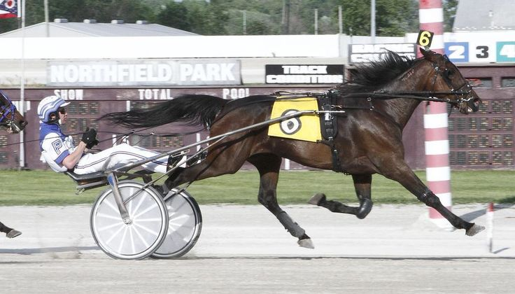 Chris Page Harness racing, Horses, Racing