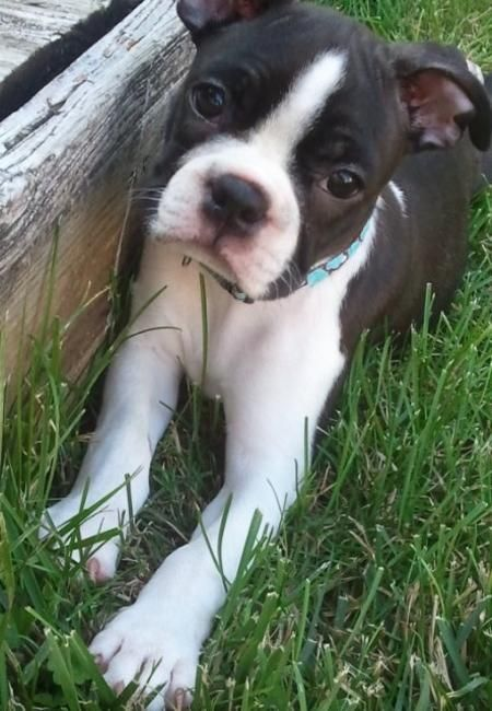Oh little baby :): Kiss, Sweet Faces, Puppy Dog Eyes, Sweet Cooper, Baby Boston, Beautiful Boston, Photo, Baby Abra