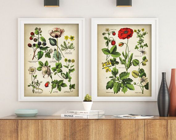 Botanical Print Set Of 2 Medicinal Plant Poster Red Poppy Flowers Antique Posters Herbs Wall Art