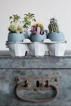 Different cacti growing in cracked eggs - Alberto Bogo - Stocksy United
