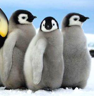 動物ブームがきた池袋のペンギンのいるBARに注目