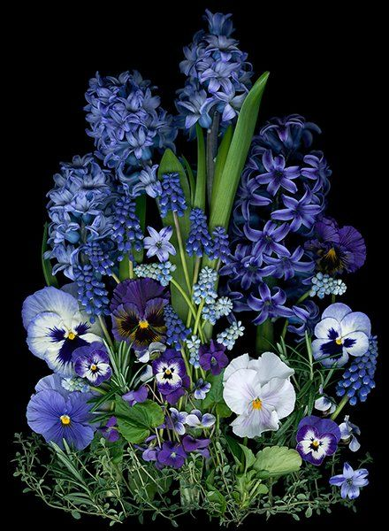garden creation in purple, blue and white...