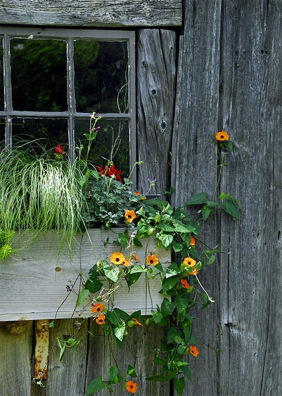 vintage window box with flowers