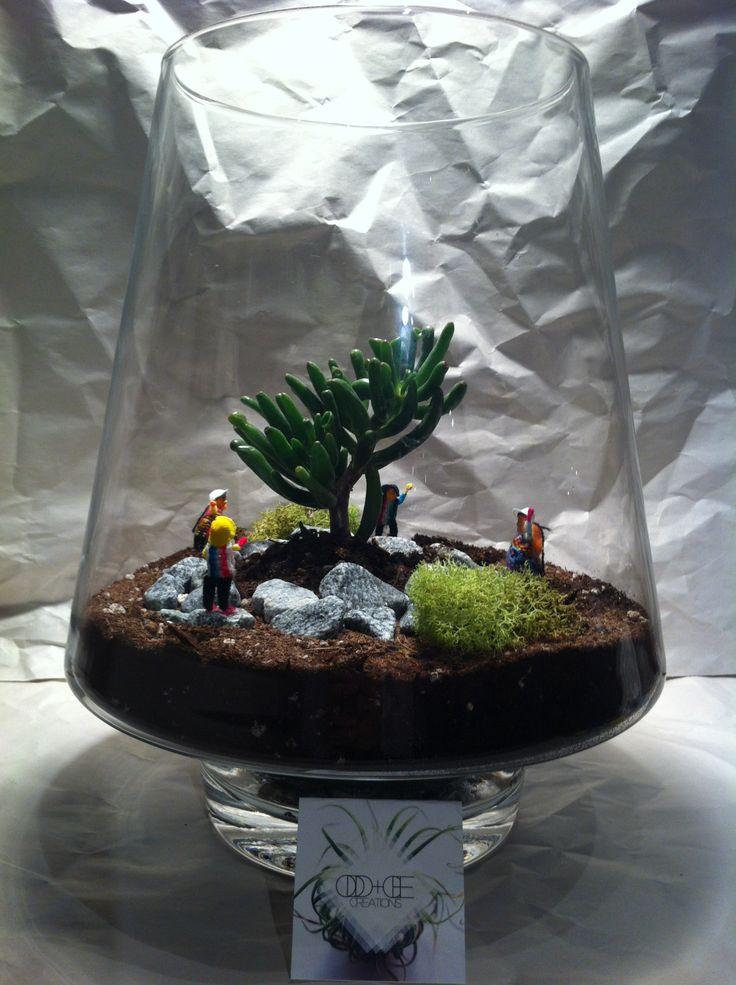 Large Jar Terrarium - $40