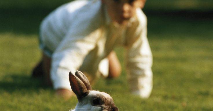 Como fazer uma coelheira. Se você estiver procurando uma nova casa para o seu coelho de estimação, algum lugar onde manter sua comida e deixá-lo dormir, pode fazer sua própria gaiola de coelho. Nas lojas, as coelheiras podem ser bastante caras e, por vezes, muito pequenas. Se você quiser dar o seu novo coelho algum espaço para se movimentar quando você não estiver em casa, ...