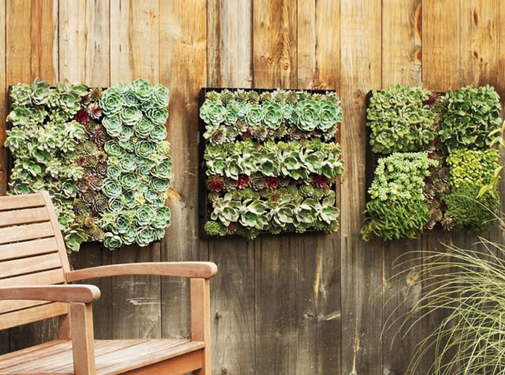very into succulents, they can be planted in anything, even mounted on the wall. They just need well drained soil and some sun. low maintenance.