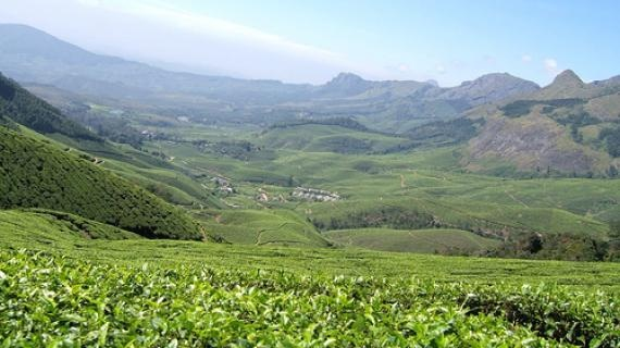 Kolukkumalai Tea Estate.  I think it would be a good time.