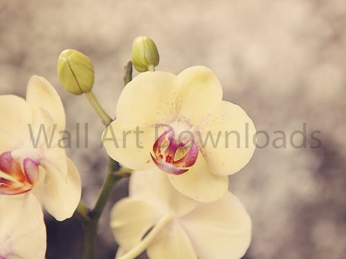 White, Yellow orchids
