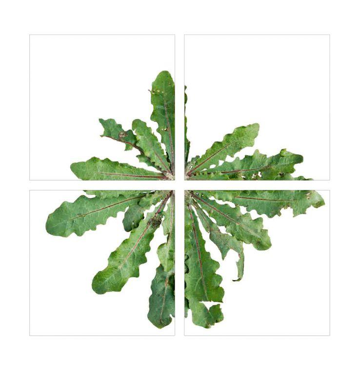 print on ceramic tiles #packaging #sponte collection #ceramic tiles #tiles  #plants #interior design #design #arredamento #livorno #italy