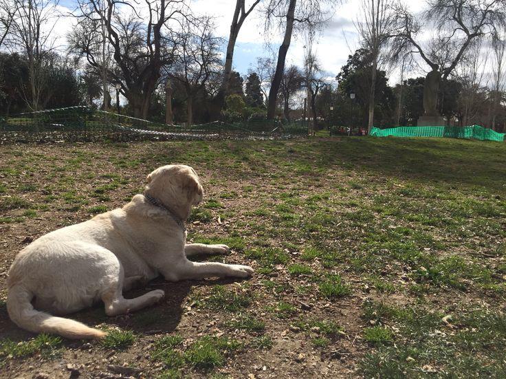 Chilling in park ciudadella , Barcelona