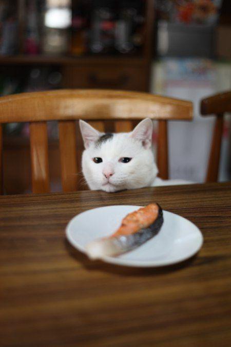 鮭 (salmon)