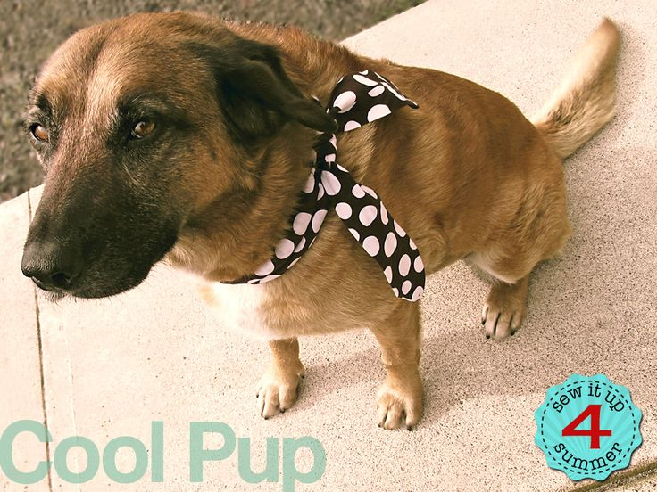 Cooling Neck Wraps for Adults, Kids & Pets