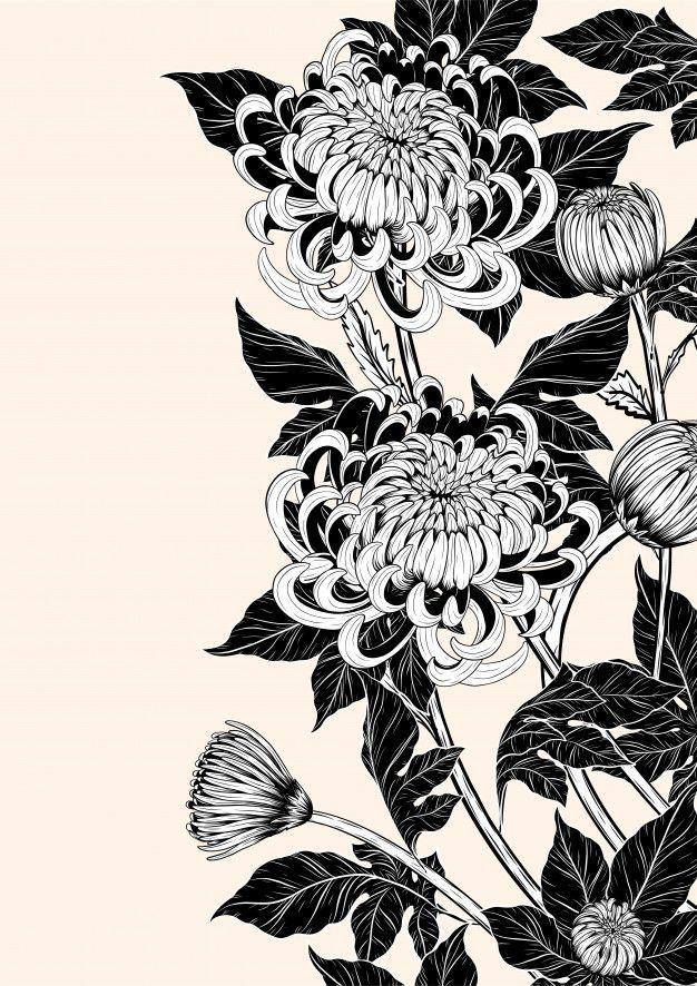 Chrysanthemum Flower By Hand Drawing Chrysanthemum Drawing Flower Drawing Drawings