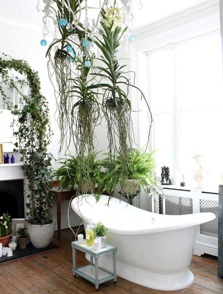 plantas oversize 5