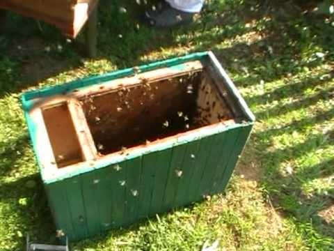 Včely - začínám - YouTube