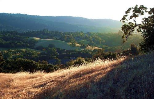California Afternoon, Redwood City, California