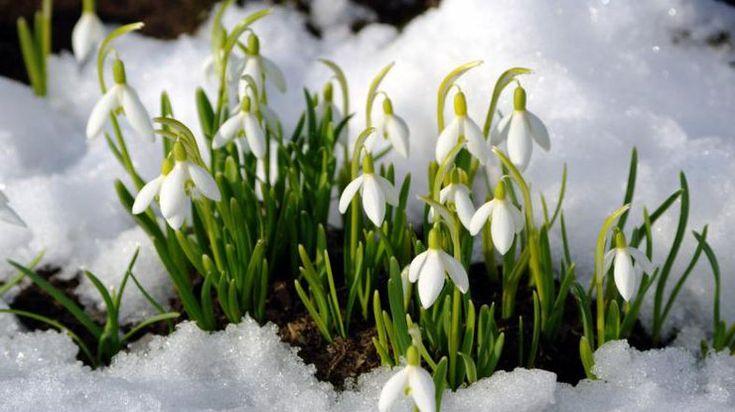 В Украине будет четыре дня выходных в честь 8 марта