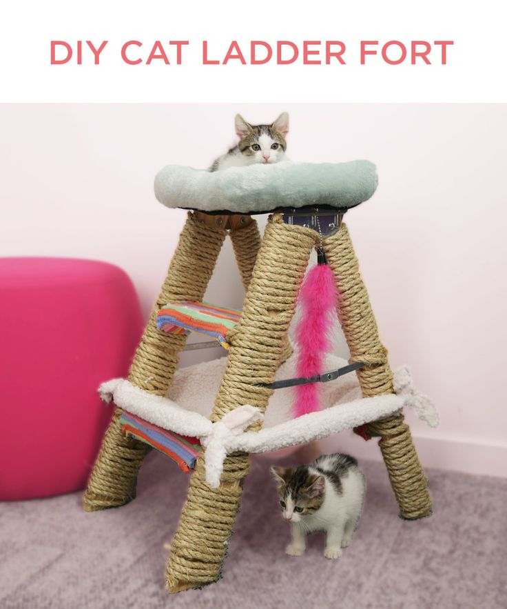 Diy cat ladder. This Cat Jungle Gym Will Have Your Feline On Cloud Nine