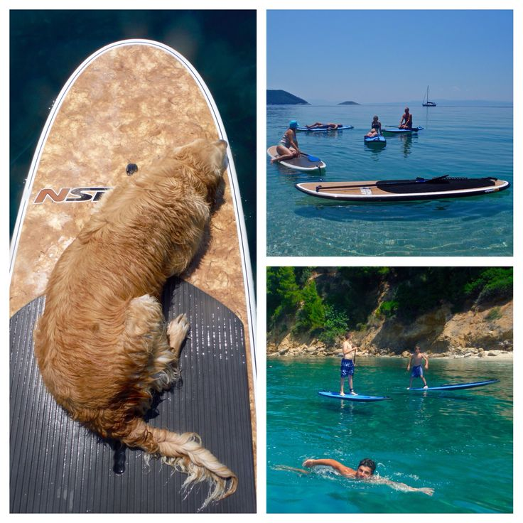#sporadessup #skopekos #openday #sup #skiathos #standuppaddle #dog #boards #nsp #cocomat #water #island