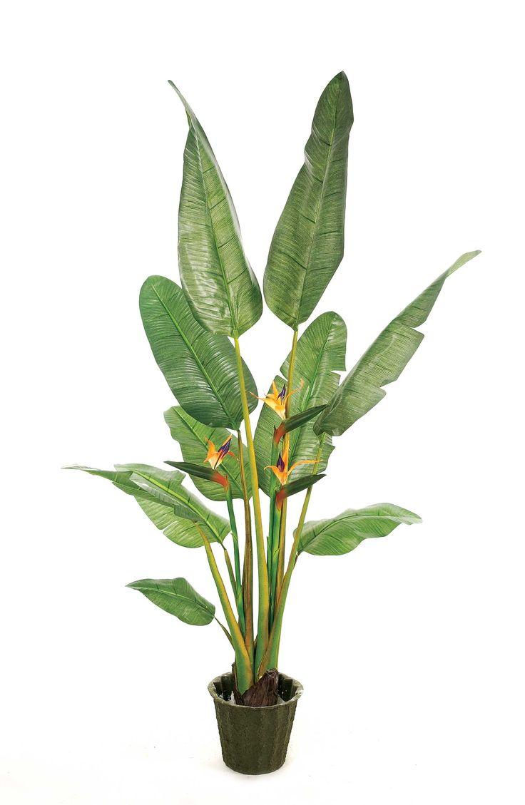 Tropical Plant Prop Pinterest Tropical Plants