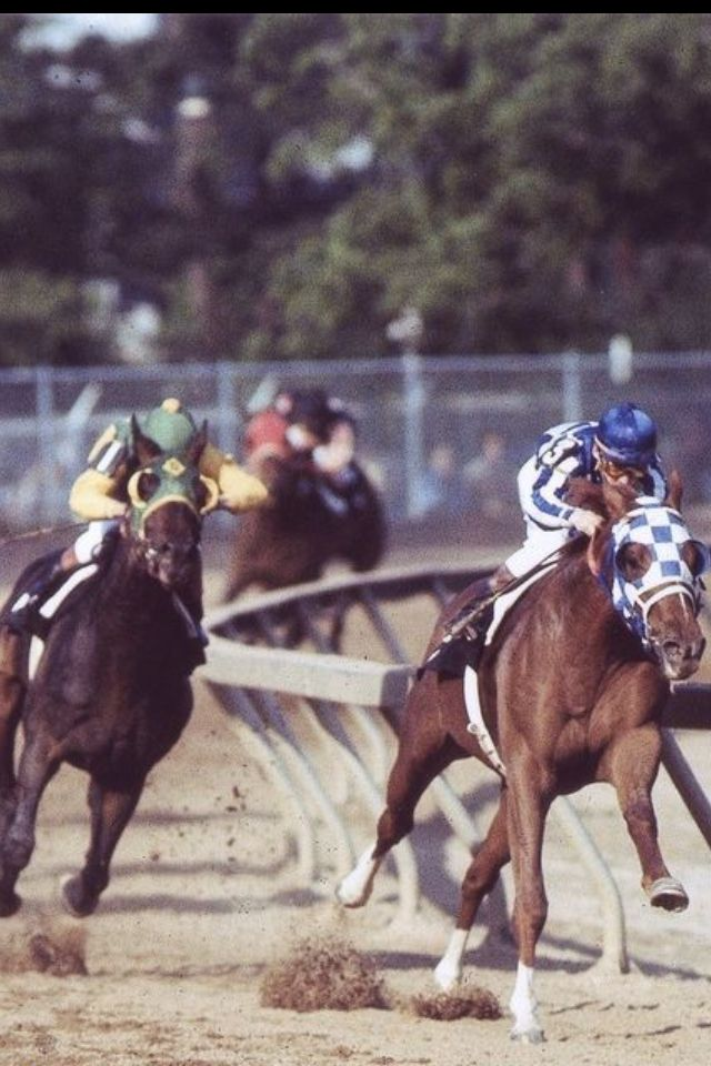 Secretariat turns for home in the 1973 Preakness Stakes, with rival Sham right behind him.