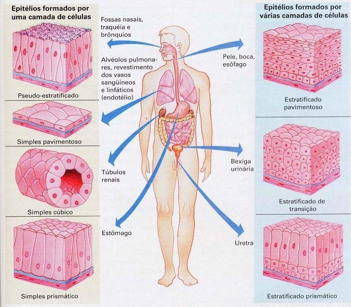 Tipos de tecido epitelial Retirado do site: http://www.ebah.com.br/content/ABAAAels0AA/tipos-tecido-epitelial-localizacao