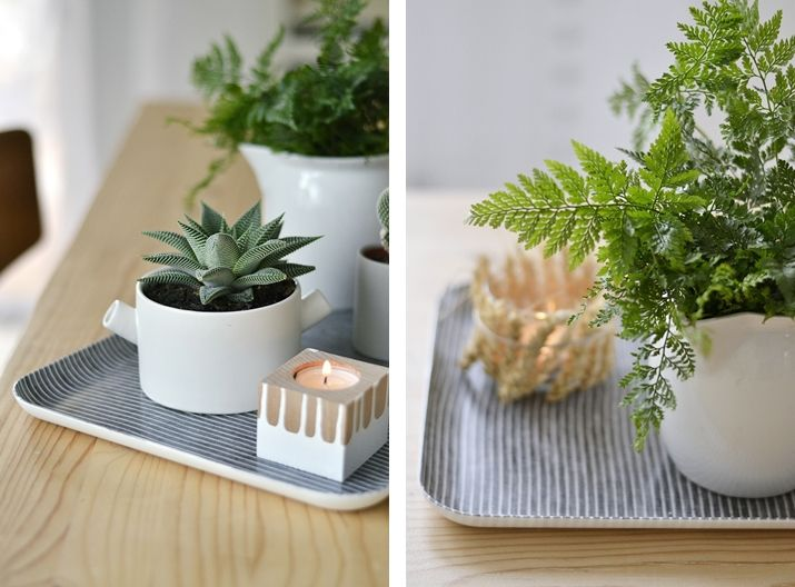 Succulents and cacti and a fern, all in white pots on the table. Gotta love.