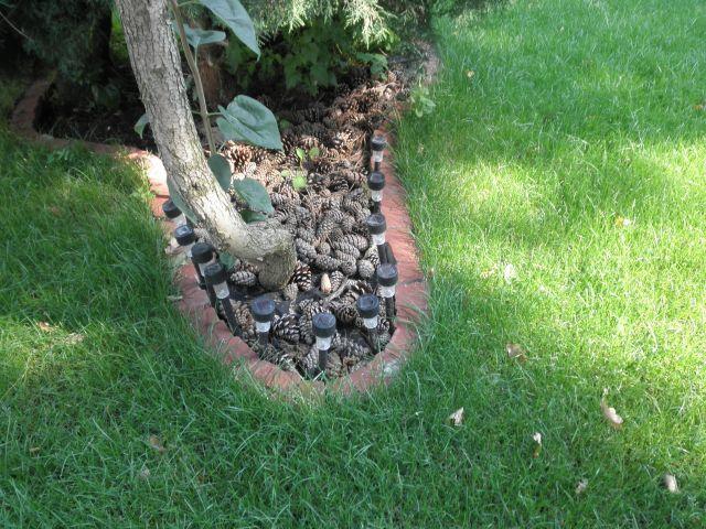 ściółka z szyszek -------------------- pine-cones mulch