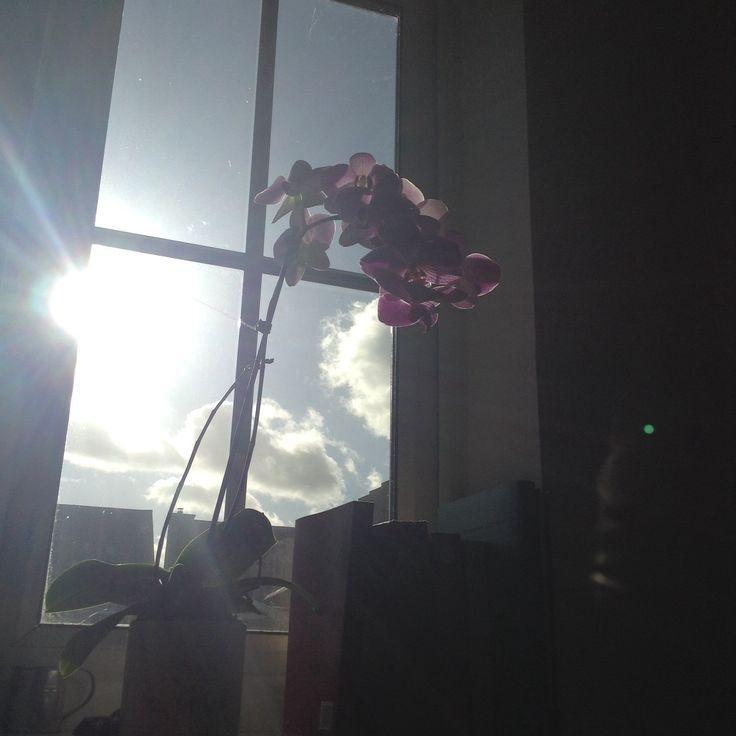 Facebook0 Google +0 Pinterest0 Oggi nel mio paesino splende finalmente il sole,essendo però stato un inverno relativamente mite ed essendo piovuto parecchio si possono osservare già i primi fiori primaverili spuntare nei giardini. Vorrei oggi condividere con voi un articolo inerente al linguaggio dei fiori,può uno di essi rappresentare la felicità?Secondo questo codice si. Sin dal Medioevo si attribuiva ai …