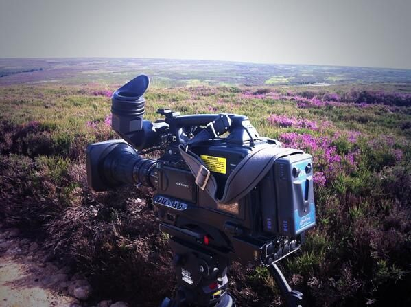 Purple heather stands out on the moors