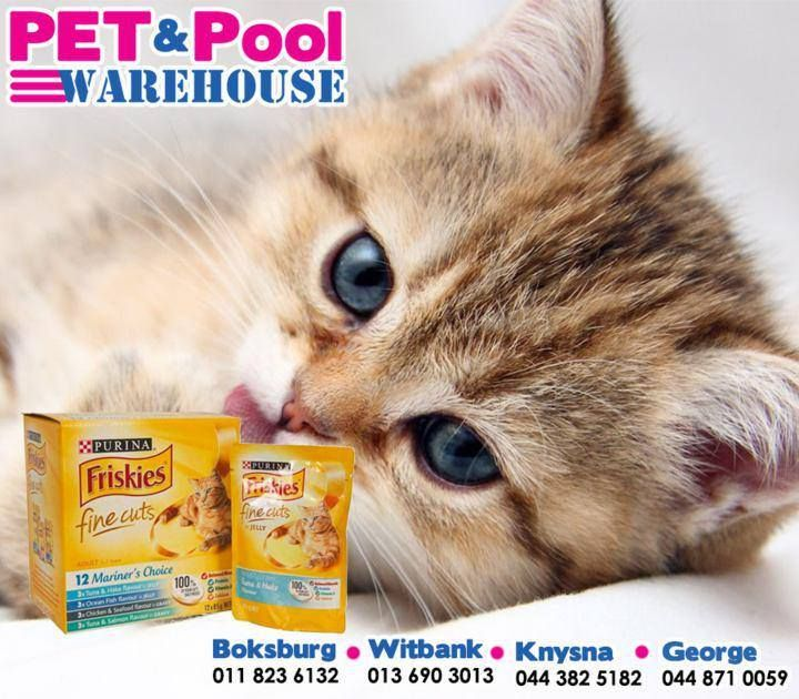 Delicious and packed with all the nutrients that your feline friend needs in assorted flavours. Head down to #PetPoolWarehouse for our assorted range of #Friskies wet and dry food. #ilovemycat