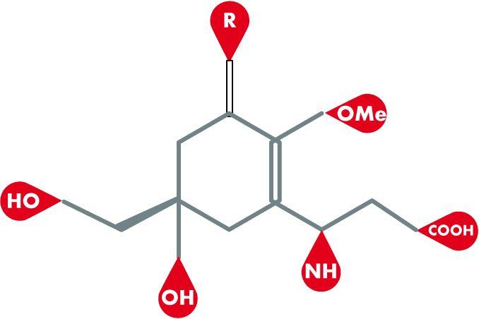 Mycosporin-ähnliche Aminosäuren (MAA) Einige Algenarten bilden sogenannte Mycosporin-ähnliche Aminosäuren (MAA). Diese Substanzen absorbieren UV-Strahlen und dienen als natürliche Sonnenschutzfilter. Die Algen absorbieren die kurzwellige UV-Strahlung und wandeln diese in unschädliche Wärmestrahlung um. Die bisher identifizierten Mycosporine sind in der Tabelle aufgeführt:  Eine verfügbare Substanz ist Helioguard-365 (Mibelle) welche einen UV-Schutz bietet und Schäden der …