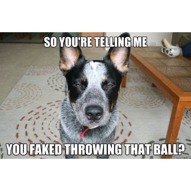 Thats What My Heelers Do All The Time Xd Xd Have A Great