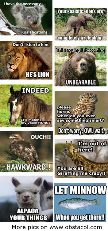 Funny animals sayings - I should not be allowed on Pinterest this early in the morning. :P
