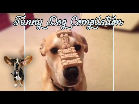 Funny Dog Vine Compilation 2016 - Try Not To Laugh