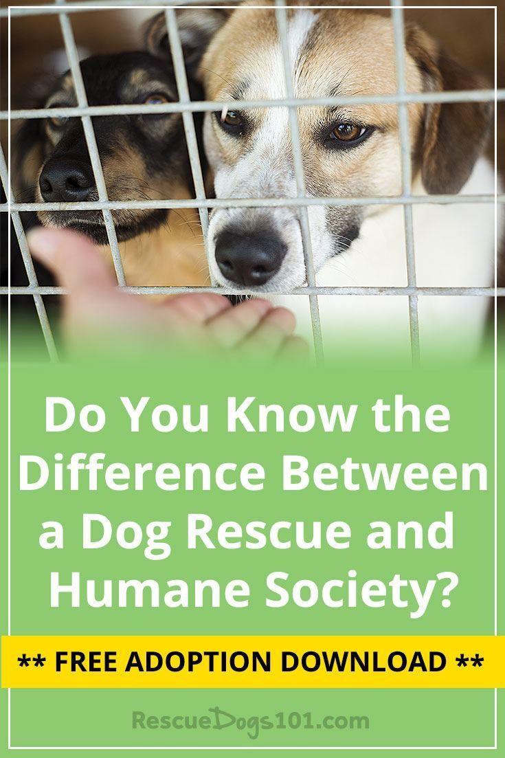 Humane Society Vs Animal Shelter Vs A Dog Rescue Rescue Dogs Humane Society Dogs