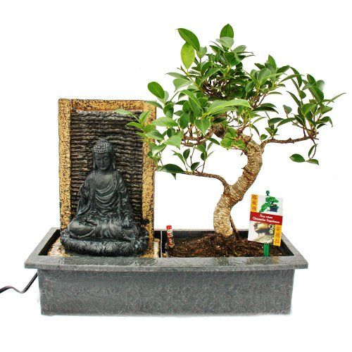 15 best images about bonsai on pinterest leaves wisteria and acer palmatum. Black Bedroom Furniture Sets. Home Design Ideas