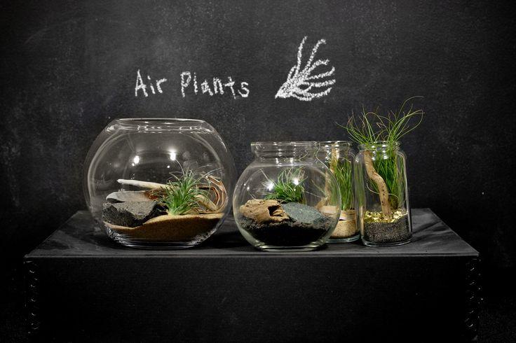 Terrarium Plants For Sale | Eight Oaks Terrariums