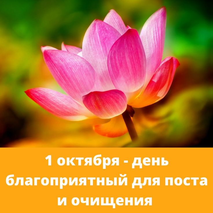 Прогноз на воскресенье, 1 октября 2017  11 – й Лунный день. День начала Экадаши – поста. Этот день ведет к счастью, процветанию и добру, дает славу.  Экадаши играет особенную роль в ведической традиции и быту. Обычно он используется как день очищения. Пост, благочестивая и религиозная деятельность и почитание духовных людей крайне приветствуются в этот лунный день.  В этот день благоприятна следующая деятельность: •  религиозная деятельность •  создание, дизайн одежды, платьев • …