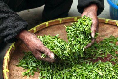 Lhuile de thé vert mon alliée pour mes ongles mes cheveux et aussi la peau !