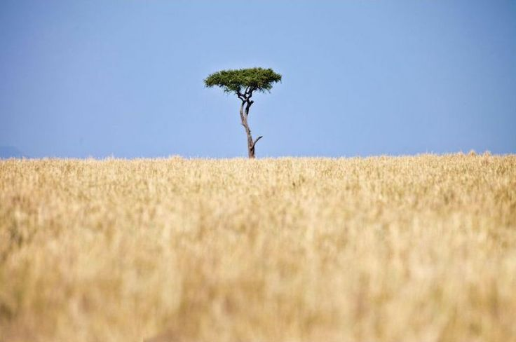 Lonely Tree at Masai Mara Park in Kenya by Grace Olsson