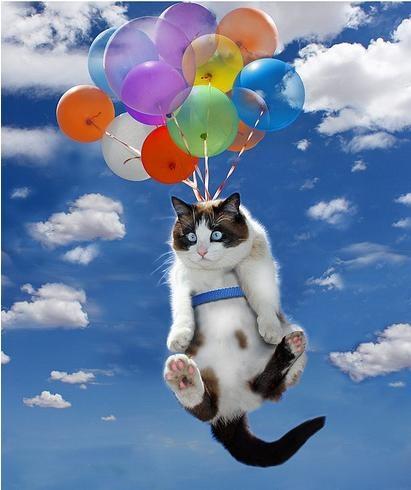 Bye bye kitty! Have a safe flight!