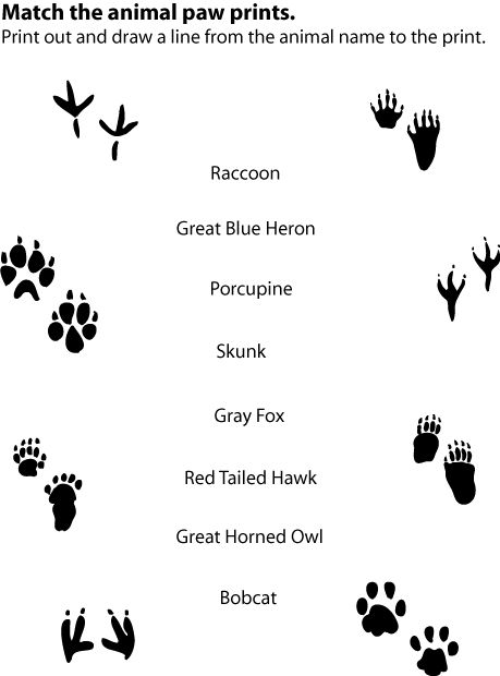 Match Animal Prints With Written Name Activity