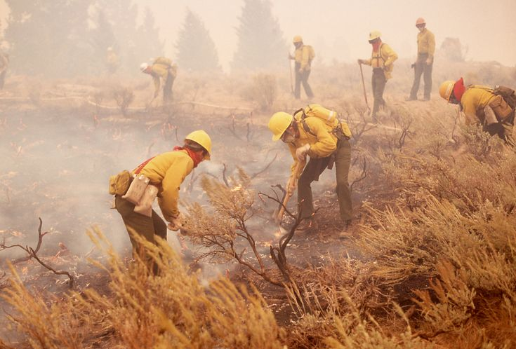 yellowstone fire | ... fire during the 1988 Yellowstone fires. Credit: National Park Service