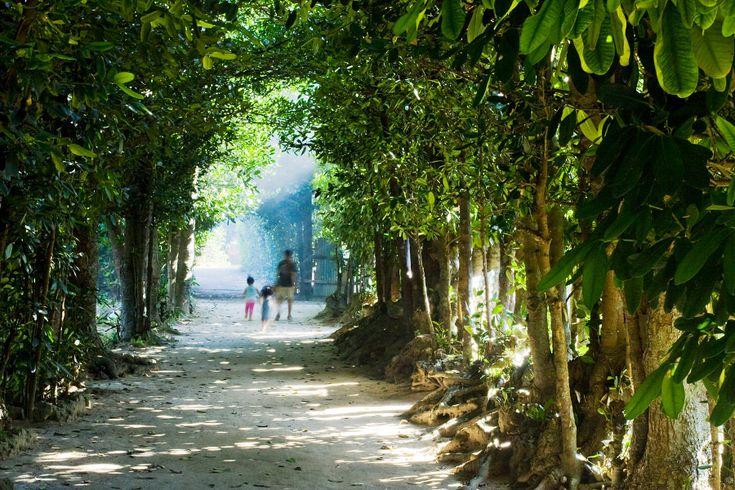 備瀬のフクギ並木 / Tree Tunnel to the Beach