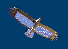 turkey vulture glider (desert hiker) Tags: balsa glider rc turkeyvulture