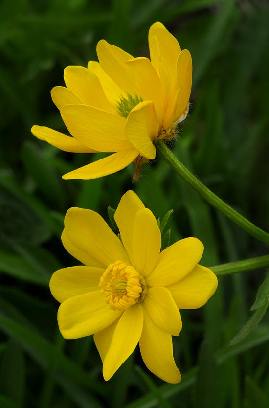 best i love yellow flowers images on, Beautiful flower