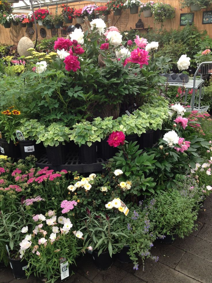Superior Gardening, Garden, Yard Landscaping, Urban Homesteading, Horticulture