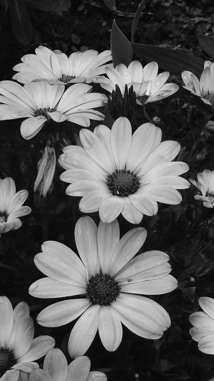 Black and white ©Tuuli