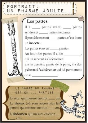 Cahier d'observation des phasmes scorpions